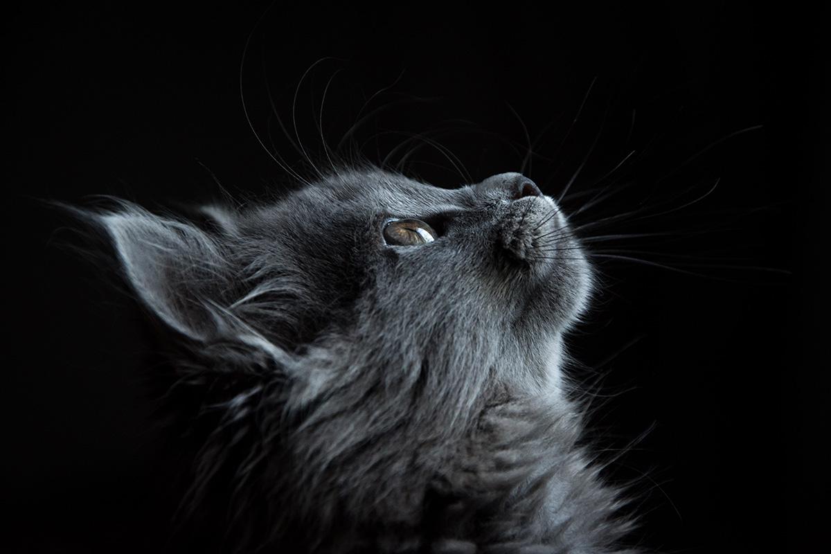 Hilfe für Katzen mit Fibrosarkom