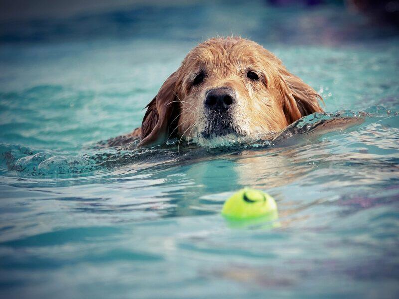 Vorfreude auf tierischen Badespass